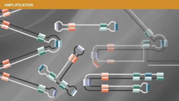 test genetico kit covid-19