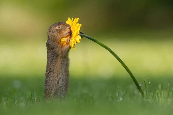 scoiattolo fiore