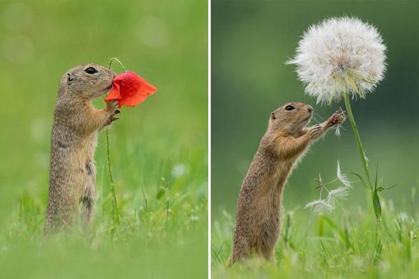 Le curiose fotografie dello scoiattolo che annusa i fiori ...