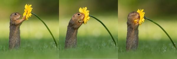 scoiattolo fiore vienna